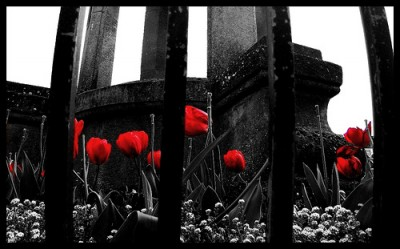 sognare a colori o in bianco e nero