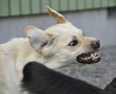 essere inseguiti da un cane feroce