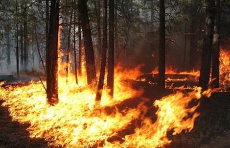 sognare incendio che divampa nel bosco