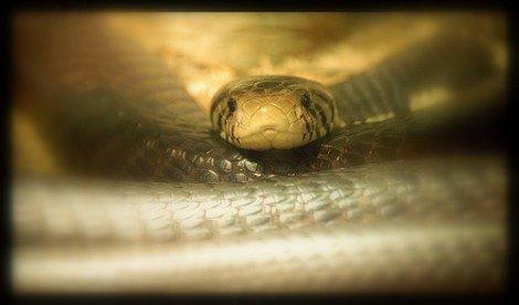 Sognare un serpente, i serpenti