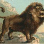 Sognare un leone, una leonessa