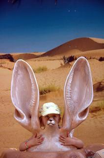 orecchie grandi, enormi