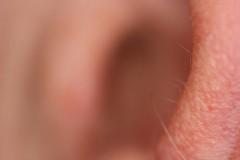 orecchio peloso