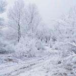 Sognare la neve