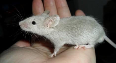 Sognare Topi Ratti Significato Sogni