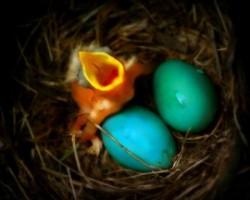 nido-con-uccellino-uova