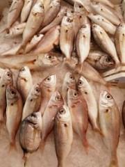 pesce-ferito