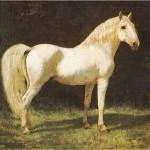 sognare cavallo bianco