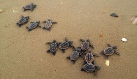 piccole-tartarughe