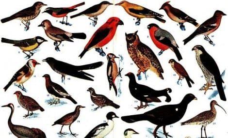 Sognare uccelli