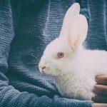 Sognare un coniglio, una lepre