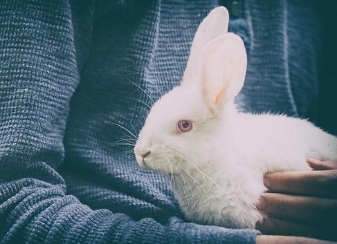 coniglio bianco in braccio; significato del coniglio nei sogni