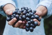 offrire uva nera