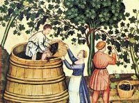 vendemmiare e pigiare uva