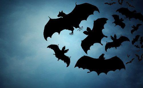 Sognare pipistrelli